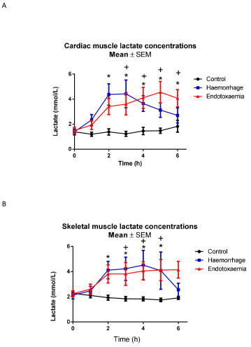 A) Myocardial and B) skeletal muscle lactate concentrations. t0 refers to baseline measurements prior to induction of endotoxemic or hemorrhagic shock. Significant increases over time in cardiac and skeletal muscle lactate were seen in both endotoxemic and hemorrhagic shock. Significant differences for individual time points are marked * for C versus H, + for C versus E, x for H versus E. C, control group; E, endotoxemic group; H, hemorrhagic group.