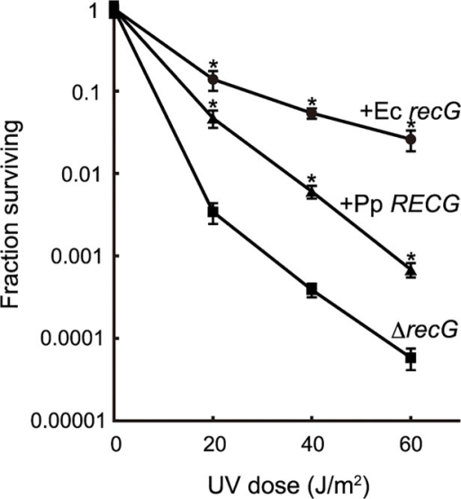 Complementation of the E. coli recG defect by RECG.E. coli recG-deficient cells harboring a plasmid carrying the P. patens RECG (+Pp RECG, triangle), E. coli recG (+Ec recG, circle) or empty vector (ΔrecG, square) were subjected to UV irradiation, and the surviving fraction was calculated as described in Materials and Methods. Data from three independent experiments are expressed as mean ± SD. *p<0.01 (versus ΔrecG).