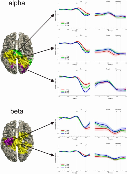Clusters of time-varying power. The time-varying change in power in the alpha-band was differentiated into three clusters, whereas the beta-band was differentiated into two clusters. The left hand plots show the cortical projection of voxels attributed to each cluster. Even though no spatial information was included in the cluster analysis, voxels with similar time-varying profile were anatomically contiguous. The right hand plots show the average time-varying power for each cluster. The shaded region along the time-series indicates the inter-subject pointwise standard error of the mean.
