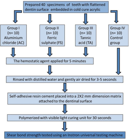 Schematic diagram representing the experimental procedure and testing groups in this current study.