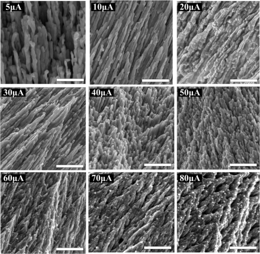 SEM images of the front surface morphology of the silver nanostructures grown with different external direct currents.The scale bar is 1 μm in all images.