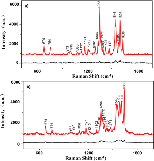 Two categories of SERS spectra of RBCs on the SERS substrate.In (a), intensity of 1358 cm−1 is much higher than that of other characteristic peaks; In (b), intensity of 1638 cm−1 is much higher than that of other characteristic peaks. For both (a) and (b), the red curves are the SERS spectra of RBC on SERS substrate while the black curves are the Raman spectra of RBC on glass slide.