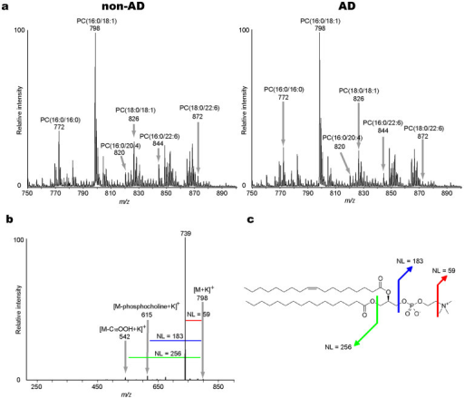 Characterization of PC molecular species in the human brain by Matrix-Assisted Laser Desorption/Ionization-Tandem Mass Spectrometry (MALDI-MS/MS).(a) The averaged mass spectra from m/z 750 to 900 in non-Alzheimer's Disease (AD; left panel) and AD brains (right panel). The annotations indicate peak assignments to the phosphatidylcholine (PC) molecular species with different fatty acid compositions. (b) The tandem mass spectrum of PC(16:0/18:1) at m/z 798 as an example of the molecular characterization by this technique. The product ions at m/z 739 and m/z 615 (from loss of trimethylamine [NL 59] and phosphocholine [NL 183] residues, respectively), were commonly observed ions formed from the PC species. The product ion at m/z 542 was assigned to a fragment that was formed by the neutral loss of palmitic acid (16:0). (c) The panel shows the structural formula for PC(16:0/18:1) and the assignment of the cleavage positions. NL, neutral loss.
