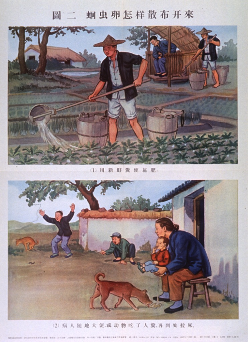 <p>Predominantly white poster with black lettering.  All lettering appears to be in Chinese characters.  Visual images are color illustrations.  Near top of poster, a man waters plants that are growing quite close to a latrine.  Below, a mother holds a child as it urinates or defecates in the yard.  A nearby dog inspects the output.  In the background, a dog defecates as a boy appears to shoo it away.</p>