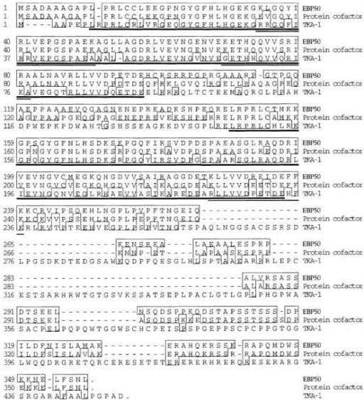 Human EBP50 has homology to rabbit protein cofactor  and human TKA-1. Identities are boxed. Sequences corresponding to the ∼90-residue PDZ domains in each of these proteins are  underlined with thick lines. The locations of sequences of the  three peptides derived from the bovine N-ERMAD binding protein are indicated by thin lines. The protein cofactor and TKA-1  sequence data are available from EMBL/GenBank/DDBJ under  accession numbers U19815 and Z50150, respectively.