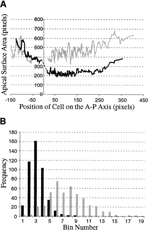 karst follicle cells fail to constrict their apices over the oocyte. (A) Plot of 578 wild-type apical cell areas from 17 egg chambers (black line) and 603 karst mutant apical cell areas from 19 egg chambers (gray line) versus each cell's position on the anterior–posterior axis. The origin of the x axis corresponds to the boundary between the nurse cell cluster and the oocyte. Each line is a rolling average (window size = 10 pixels). (B) Histograms representing the distribution of apical surface areas from those follicle cells residing on the oocyte. Data was grouped as follows: bin 1 = 0–50 pixels, bin 2 = 51–100 pixels, bin 3 = 101–150 pixels, etc., up to bin 19 = 901–950 pixels.