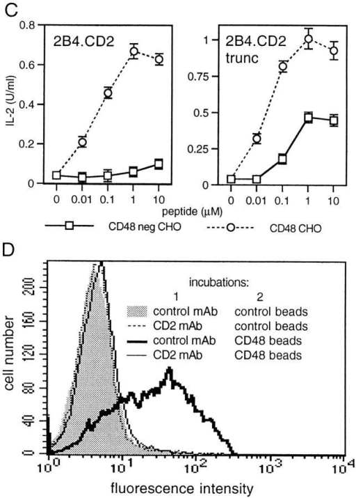 The CD2/CD48 interaction enhances T cell antigen recognition. (A) Antigen recognition by 2B4.CD2 cells using as APCs untransfected I-Ek+ CHO cells (CD48 neg CHO), I-Ek+ CHO cells stably transfected with CD48 (CD48 CHO), or CD48− revertant cells derived from the latter clone (CD48 CHO revertant). In each well, 5 × 104 2B4.CD2 cells were mixed with the same number of APCs and the indicated concentrations of peptide. After 18 h of culture, supernatants were analyzed for IL-2. Error bars represent the SE of triplicate cultures. (B) Comparison of antigen recognition by 2B4 cells expressing high levels (2B4.CD2) or very low levels (2B4) of CD2 using CD48+ or CD48− I-Ek+ CHO cells as APCs. Experiment performed as in A. The results were normalized to aid comparison between the different 2B4 cells, letting 100% equal maximal peptide-stimulated IL-2 secretion in the presence of CD48 neg CHOs. (C) Comparison of antigen recognition by 2B4 cells expressing full-length (2B2.CD2) or truncated (2B4.CD2trunc) forms of CD2 cells with CD48+ or CD48− I-Ek+ CHO cells as APCs. Experiment performed as in A. (D) Binding of CD48-coated beads to 2B4.CD2 cells is blocked by a CD2 mAb. 2B4.CD2 T cells were incubated with a mouse CD2 (RM2-1) or control (OX11) mAb before incubation with CD5- (control) or CD48-coated fluorescent beads, followed by flow cytometry. Identical results were obtained with 2B4.CD2trunc T cells.
