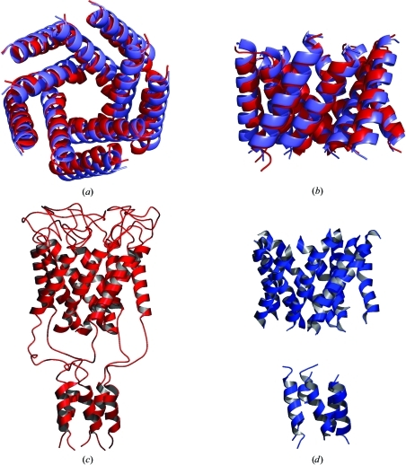 (a) Comparison of the known transmembrane helical structure of MscL (red) and the model derived from ab initio molecular replacement (blue). (b) View perpendicular to the membrane normal. (c) Ribbon representation of the known MscL structure. (d) Ribbon representation of the transmembrane and cytoplasmic helices built by ARP/wARP HelixBuild into electron density computed with phases from ab initio molecular replacement. This figure was prepared with PyMOL (DeLano Scientific, San Carlos, CA, USA) and POVSCRIPT (Fenn et al., 2003 ▶; Kraulis, 1991 ▶)
