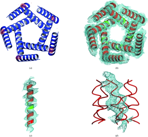 (a) Anomalous difference electron-density map (red) contoured at 4σ computed for a gold derivative using the phases obtained from ab initio molecular replacement. 2F                  o − F                  c map contoured at 1σ computed from ab initio phases with omitted residues shown in green for (b) the complete transmembrane ensemble, (c) for a single transmembrane helix and (d) for the cytoplasmic domain (for clarity, the electron density is shown for only one cytoplasmic helix).