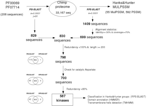 Procedure involved in the detection of putative protein kinases (PPKs) in the chimpanzee genome. The number of selected proteins at each step is indicated in the diagram.