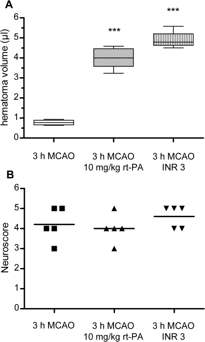 Comparison of hemorrhagic transformation 24 h after MCAO in mice with different antithrombotic pretreatment.A) Comparison of HT volumes in mice who received i.v. thrombolysis with 10 mg/kg human recombinant t-PA directly prior to reperfusion (middle, n = 5) and mice who were effectively anticoagulated to an INR of approximately 3 at the onset of 3 h MCAO (right, n = 4 after exclusion of outlier, see Fig. S1) with mice who underwent 3 h MCAO without any treatment (left, n = 5). Hematoma volume was determined by a hemoglobin assay. Data are depicted as box and whiskers plots showing the 25 to 75 interquartile range and the extreme values. Statistical significance was analyzed with ANOVA and bonferroni correction for multiple testing. *** p<0.001. B) Neuroscores were assessed for statistical significance with a Kruskal-Wallis test and Dunn's correction. Differences between groups were not significant (median values 4, 4 and 5).