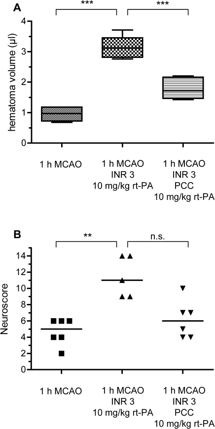 The excessive degree of HT and the reversal of anticoagulation with PCC are functionally relevant in a model of milder strokes.A) Mice receiving rt-PA (10 mg/kg) after 1 h MCAO under warfarin treatment (middle, n = 5) show a significantly greater HT volume than control mice (left, n = 6). Reversal of oral anticoagulation with PCC (100 IU/kg) significantly attenuates HT (right, n = 6). *** p<0.001. B) Functional neurological outcome was evaluated on a 14-point neuroscore and statistical significance was assessed with a Kruskal-Wallis test with Dunn's correction, median values are given (5, 11 and 6, ** p<0.01).