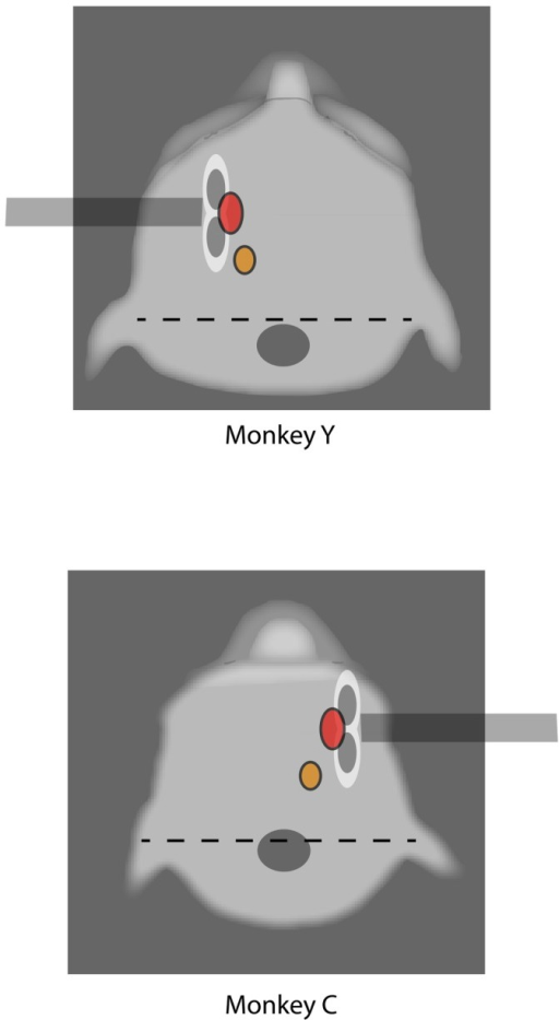Schematic of TMS sites.Modified picture showing a top view of each of the two monkey's scalp profiles (animals 'Y' and 'C'), while posted and under training. The dotted line corresponds to the stereotaxic zero bar; the grey dot signals the location and size of the head-post; the orange dot corresponds to the location where digit movements were evoked by TMS pulses; the red dot FEF region of stimulation; the double white/grey dots is an approximate schematic representation of the TMS figure-of-eight coil which was located on the FEF region.