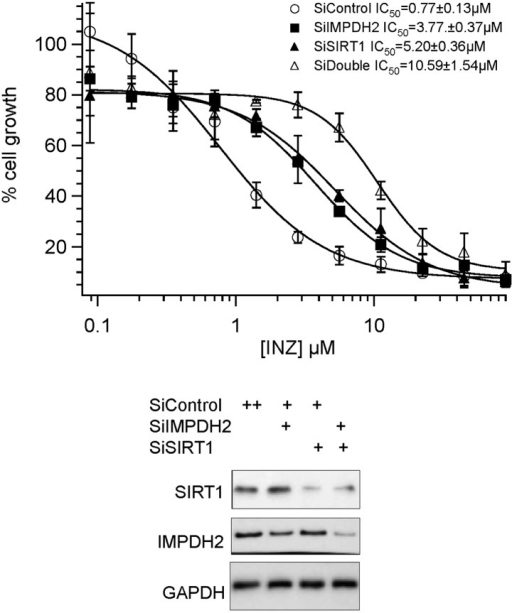 Combination effect of co-depletion of IMPDH2 and SIRT1 on INZ induced cell death. HCT116 cells, transfected with scrambled siRNA (SiControl), IMPDH2 siRNA (SiIMPDH2), SIRT1 siRNA (SiSIRT1) or co-transfected with IMPDH2 and SIRT1 siRNA, were treated with different doses of INZ and cell viability were assessed by WST cell growth assays. IC50 values are represented as mean ± standard deviation (n=3).