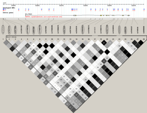 Linkage disequilibrium (LD) plot across AGPAT6. The box at the top shows the AGPAT6 gene with the location of the 28 SNPs included in this study. The 11 tag SNPs are indicated by circles around the rs number of the SNPs. The LD plot is based on the measure of D'. Each diamond indicates the pair wise magnitude of LD, with dark grey diamonds indicating strong LD (D' > 0.8) and light grey: uninformative. LD: linkage disequilibrium is the non-random association of alleles at two or more loci, not necessarily on the same chromosome. Linkage disequilibrium describes a situation in which some combinations of alleles or genetic markers occur more or less frequently in a population than would be expected from a random formation of haplotypes from alleles based on their frequencies.