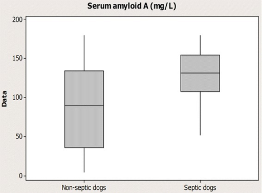 Boxplot graph illustrating Serum amyloid A concentrations in bitches with pyometra. Eight non-septic bitches and 23 septic dogs with pyometra including in this study.