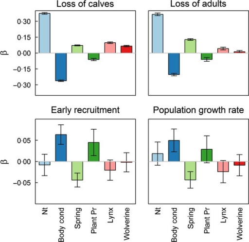 Standardized estimates of the impact of log population size (Nt), herd body condition in the previous fall (Body cond), onset of spring (Spring), plant productivity (Plant Pr) and population size of lynx and wolverine on claimed loss of calves (<1 year); claimed loss of adults (>1 year); early recruitment and population growth rate.