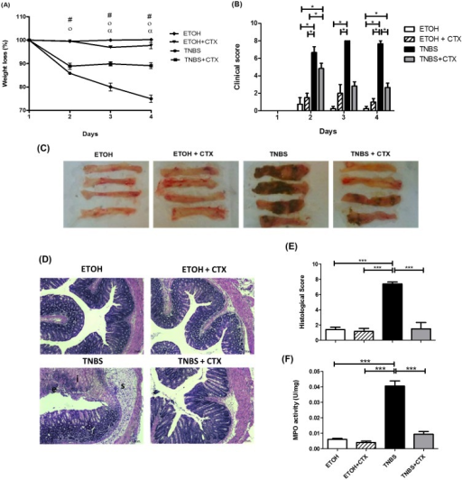Effect of CTX treatment on the colitis induced by TNBS instillation in BALB/c mice.(A) Body weight changes (%) of BALB/c mice during four days after the intrarectal instillation of TNBS (2.5 mg/animal) in 45% ethanol solution. The control mice received the 45% of ethanol solution. CTX (0.035 mg/kg) was administered i.p. 18 h after TNBS-induced colitis, and saline solution was administered as control. # (p<0.05) ETOH versus TNBS and TNBS+CTX; o (p<0.05) ETOH+CTX versus TNBS and TNBS+CTX; α (p<0.05) TNBS versus TNBS+CTX (n = 4–6 mice/group). (B) Disease activity index calculated as described in material and methods. The results were expressed as mean ± SEM (n = 4–6 mice/group); (C) Macroscopic appearance of colonic portion (4 cm) obtained from each mice/group at 4 days after TNBS-induced colitis; (D) Histological analysis of perirectal segment from mice of distinct experimental groups stained with H&E (Structures: (e) epithelial damage, (i) inflammatory infiltrate and (s) submucosa edema) obtained after 4 days of TNBS-colitis; (E) Histological score of inflammatory reaction perirectal segment of each experimental group of mice (n = 4–5 mice/group); (F) MPO activity of colonic tissue of each experimental mice-group. Groups: ETOH (control- 45% ETOH); ETOH+CTX (45% ethanol group treated with CTX); TNBS (TNBS instillation in 45% ETOH- inflammatory bowel disease) and TNBS+CTX (TNBS-instillation in 45% ETOH that received the CTX) (n = 4–5 animals/group). * p<0.05; *** p<0.001.