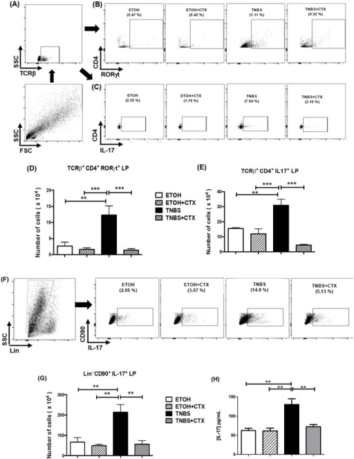 Effect of CTX on Th17 cells, ILC3 and IL-17 secretion of mice with acute colitis induced by TNBS.Cell suspensions were prepared from lamina propria of distinct experimental groups after 4 days of TNBS-induced colitis and that received or not the CTX. The TCRß+CD4+RORγt+, TCRß+CD4+IL-17+ and Lin-CD90+IL-17+ cells were analyzed by flow cytometry. (A, B and C) Strategy for the analysis of TCRß+CD4+RORγt+ and TCRß+CD4+IL-17+ cells in the lamina propria obtained from each group of mice. The results of TCRß+CD4+RORγt+(D) and TCRß+CD4+IL-17+ cells (E) expressed as the mean of the absolute number ± SEM. The samples were prepared from a pool of cells from 4–5 animals/group performed in duplicate. The results are from 2–3 independent experiments. (F) Strategy for the analysis of the Lin-CD90+IL-17+ cells. (G) The results of Lin-CD90+IL-17+ cells were expressed as a mean of the absolute number ± SEM. The samples were prepared from a pool of cells from 4–5 animals/group performed in duplicate. The results are from 2 independent experiments. (H) Secretion of IL-17 in colonic tissue homogenates determined by ELISA. The results represent the mean obtained in the individual samples/group ± SEM. * p<0.05, ** p<0.01 and *** p<0.001 (n = 4–5 animals/group).