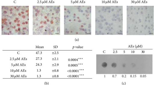 Effect of AEs on global DNA methylation levels in MDA-MB231 cells. Low doses of AEs (2.5–30 μM) for 10 days treatment decreased levels of 5-mC, 5-methylcytosine, in a dose-dependent manner. 5-mC specific antibody was used for (a) and (b) cytostaining and (c) for dot blot analysis on genomic DNA. (a) The image shown is representative of at least three independent experiments. Scale bar: 100 μm. (b) The 5-methylcytosine positive cells versus total cells were counted by using an inverted microscope (20x) and the results are reported as mean ± SD. (c) The intensity of individual DNA dots shown was quantified by densitometry.