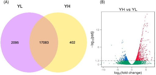 Comparative results of gene expression levels and differentially expressed gene distributions between the ovaries of Yorkshire pigs with extremely high (YH) and low (YL) litter size.(A) Venn diagram showing genes only expressed in the YH group (yellow circle), only expressed in the YL group (light red circle), and common to both groups (intersection). (B) Scatter plot of differentially expressed genes (YH vs. YL). Red points represent upregulated genes with log2 (fold change) > 1 and padj < 0.05 (–log10 (padj) ≥ 1.3); Blue points represent downregulated genes with log2 (fold change) < -1 and padj < 0.05 (–log10 (padj) ≥ 1.3). Green points represent genes with no significant difference. Fold change = gene normalized expression of the YH group / gene normalized expression of the YL group.