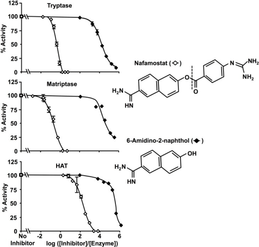 Product inhibition by 6-amidino-2-naphthol.These graphs compare inhibitory potency of nafamostat with that of its liberated cleavage product, 6-amidino-2-naphthol, versus matriptase and β-tryptase.