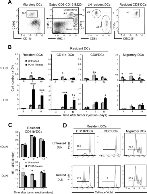 Treg depletion induces high numbers of CD11b+ DCs in tumour-draining LNs.Groups (n = 3) of untreated and PC61-treated mice were injected s.c. with 2x105 4T1 tumour cells and DC subsets later analyses. (A) Gating strategy for DC subsets in normal LNs. Lineage- cells (CD3ε- CD19-B220-) were examined for CD11c and MHC-II expression to quantify lymphoid-resident DCs (CD11chiMHC-IIint) and migratory DCs (CD11cintMHC-IIhi) (center panel). Resident DCs were further gated for the expression of CD11bhi and CD8+ and DEC205+ (right panel). Migratory DCs were further gated into CD103+ DCs (left panel). (B) Numbers of resident DCs, migratory DCs and CD11bhi, CD8+ subsets belonging to the resident DCs in tumour non-draining LNs (nDLN) and draining LNs (DLN) at indicated time after injection of tumour cells. (C) Comparison of the Mean Fluorescence Intensity (MFI) of the MHC II on CD11b+ subsets studied at day 7 in the indicated organs. (D) Histograms show the proliferation of CellTrace violet-labeled naïve CD8 T cells stimulated by DC subsets sorted at day 7 in the indicated organs with the gates shown in (A). Data are representative of two independent experiments for the kinetics and for times at day 7. Bars show mean values ± SEM. *,p<0.05, **,p<0.001, ***,p<0.0001. P values were calculated using Student's t test.