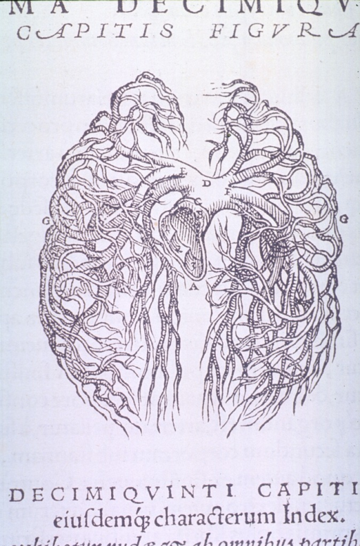 <p>Venous circulation to the lungs.</p>