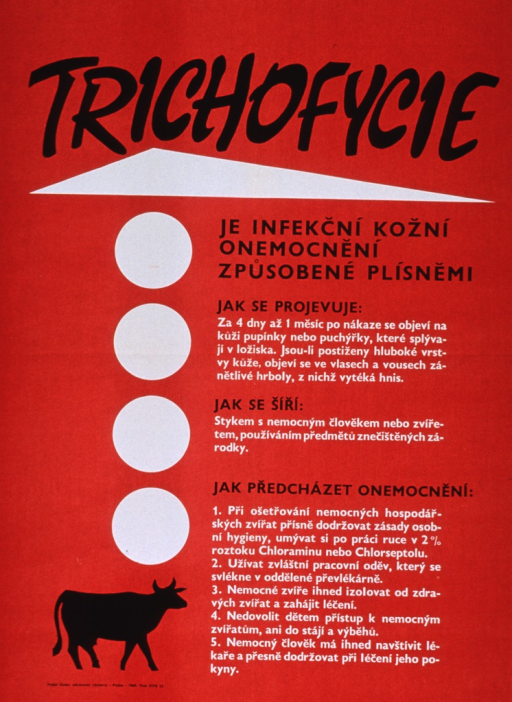 <p>Red poster with black and white lettering.  Title at top of poster.  Visual images include a white triangle, four white circles, and the silhouette of a cow, all on left side of poster.  Significant amount of text on poster appears to discuss the symptoms of ringworm, how it is spread, and precautions to take.  Publisher information at bottom of poster.</p>