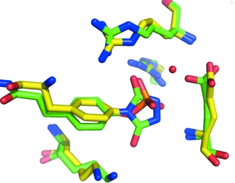 Overlay of the crystal structures of the Src SH2 domain with acetylated pYEEI peptide (PDB code 1a1b; in yellow) and the urazole derivative of the YEEI peptide (in green; Chung et al., in preparation). The extensive hydrogen-bonding interactions made by the urazole are shown by dotted green lines. The excellent phosphate mimicry of the urazole heterocycle within this recognition pocket is evident.