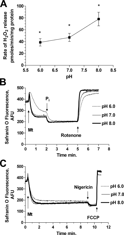 Effect of medium pH on rate of ROS release (A) and level of membrane potential of mitochondria oxidizing complex I substrates glutamate and malate (B and C). Basic incubation medium was supplemented with 1 mm Pi (A and C) and 100 nm nigericin (A). For traces of membrane potential (B and C), pH was adjusted to the values indicated by each trace. The additions of mitochondria (Mt), 1 mm Pi, 1 μm rotenone, 100 nm nigericin, and 200 nm FCCP were made at the time points indicated by the arrows. Statistical analysis was as follows. All data sets for ROS rates were statistically different from each other (n = 4; *, p < 0.05, t test).