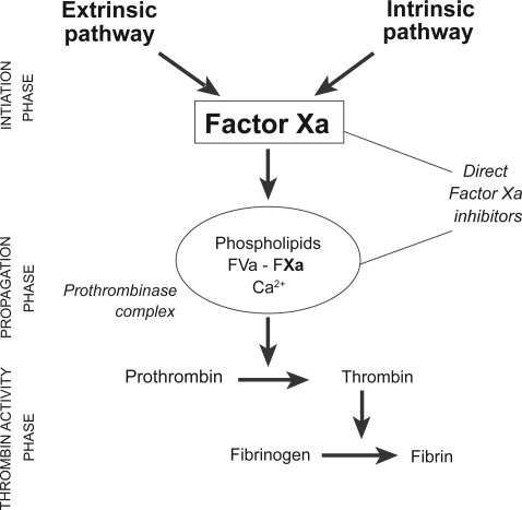 Schematic represention of the coagulation cascade with indication of mechanism of action of direct FXa inhibitors. Reproduced with permission from Bayer HealthCare.