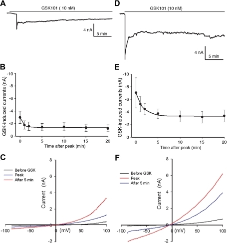 Effects of GSK101 on whole-cell membrane current (patch clamp) in HeLa-TRPV4 cells.A–C: HeLa-TRPV4 cells in Ca2+ containing media. A. A representative trace of GSK101-induced whole cell current showing a rapid increase at 1 min stimulation followed by channel desensitization (holding potential at −90 mV). B. Summary data showing the time course of GSK101-induced membrane current (Mean ± SE, n = 4) displaying a peak activation at 1 min followed by a partial desensitization of the channels. The time course for desensitization was fit to a single exponential equation and yielded a time constant (τ) for decay of 0.8±0.1 minutes.C. Current-voltage plot of a HeLa-TRPV4 cell under GSK101 stimulation, using a voltage ramp protocol from −100 to 100 mV over 200 msec. D–E: HeLa-TRPV4 cells in Ca2+ free media (Na+ containing media). D. A representative trace of GSK101-induced whole cell current showing a similar pattern of channel activation as shown in A, but at a larger magnitude in Ca2+ free media. E. Summary data showing the time course of GSK101-induced membrane current (Mean ± SE, n = 4) in Ca2+ free media. The time course for desensitization was fit to a single exponential equation witha τ for decay of 3.8±1.8 minutes (NS from Ca2+-containing media in B). F. Current-voltage plot of a HeLa-TRPV4 cell under GSK101 stimulation in Ca2+ free media, using a voltage ramp protocol from −100 to 100 mV over 200 msec.