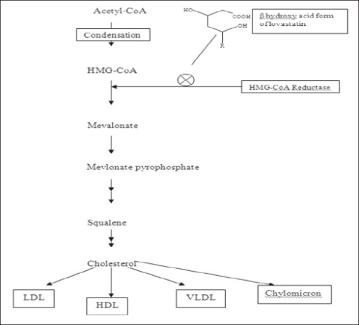 Role of lovastatin in inhibition of cholesterol synthesis The cellular and molecular mechanism of statins by considering the biosynthetic pathway of cholesterol. The main step leading to the reduction in cholesterol synthesis is the decrease in the precursor mevalonate by the inhibition of the HMG-CoA reductase. By inhibiting the HMG-CoA to mevalonate, the biosynthesis of two major downstream products of mevalonate, cholesterol production and synthesis of isoprenoids are influenced.