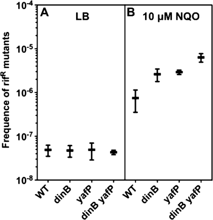 Effect of Pol IV and YafP on NQO-induced mutagenesis. Frequency of spontaneous (A) and NQO-induced (B) rifampicin resistant (RifR) mutants in WT, dinB, yafP and dinB yafP strains. Each point represents the mean (±SE) values from at least five replicates in three independent experiments. The median values for WT, dinB, yafP, dinB yafP RifR frequency mutants are respectively: 3.30 × 10−8, 3.04 × 10−8, 2.71 × 10−8, 4.21 × 10−8 in LB and 2.86 × 10−7, 1.74 × 10−6, 2.54 × 10−6, 4.74 × 10−6 in LB with 10 μM NQO.