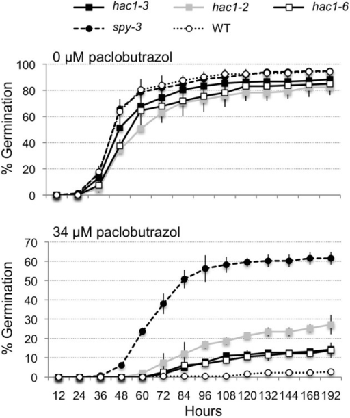 The hac1 mutants are moderately resistant to the inhibitory effects of paclobutrazol on seed germination. Mutant and wild-type Col-0 (WT) seeds were surface sterilized, imbibed in the dark at 4°C for 3 days and then sown on Petri plates with Arabidopsis minimal media and 0 or 34 μM paclobutrazol. The Petri plates were incubated under continuous light at 22°C and scored for seed germination at regular intervals. The spy-3 mutant (Jacobsen and Olszewski, 1993) was included as a positive control. Error bars indicate standard deviations. N = 2.