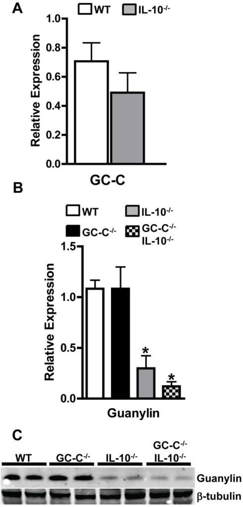 Guanylin production is nearly absent during colitis associated with IL-10 deficiency.(A) GC-C mRNA is not affected by intestinal inflammation, as measured by realtime RT-PCR. n = 5–6 per group (B) Guanylin gene expression is highly reduced in GC-C−/−IL-10−/− colon. n = 5 per group; *p<0.005 (C) Western blotting indicates that guanylin protein expression is suppressed by colonic inflammation in both IL-10−/− and GC-C−/−IL-10−/− mice. On this representative blot, each lane represents a sample from an individual mouse. β-tubulin is shown to demonstrate equal loading within each lane.