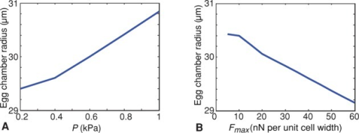 Internal egg chamber pressure and maximum contractile force have opposing effects on egg chamber radius. (A) Plot showing change in egg chamber radius as a function of internal pressure (P). Increase in pressure increases the egg chamber radius (here Fmax = 40nN per unit-cell width). (B) Plot showing change in egg chamber radius as a function of maximum contractile force Fmax. Increase in Fmax decreases the egg chamber radius (here P = 0.4 kPa).