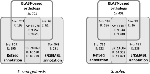 Venn's diagrams reflecting coincidences bySoleaspecies among sole, Blast-based orthologs and transcripts with RefSeq/ENSEMBL ortholog for zebrafish. Diagrams are comparing the 11,743 Blast-based orthologs with the unique zebrafish RefSeq identifiers in SoleaDB for S. senegalensis (39,851) and S. solea (34,949) and with the unique zebrafish ENSEMBL identifiers in SoleaDB for S. senegalensis (39,270) and S. solea (34.389). Within the Venn's diagrams, the numbers refer to the amount of transcripts in SoleaDB for S. senegalensis (Sse) and S. solea (Sso), the number of transcript in SoleaDB with a zebrafish RefSeq identifier (R) of with a zebrafish ENSEMBL identifier (E).