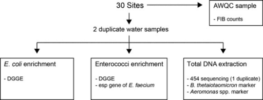 Schematic of the sampling and experimental procedures.