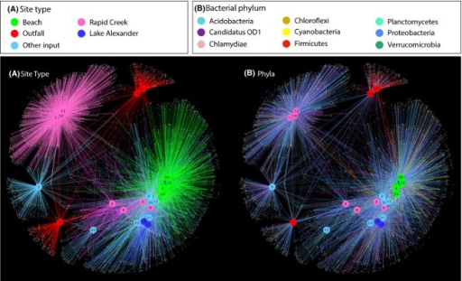 Network analysis of the top 5000 most abundant OTUs (97% similarity) in which the connecting edges are colored by site type (A) and bacterial phylum (B). Site nodes are consistently colored according to site type in both (A and B). The top 9 most abundant bacterial phyla were used in (B).