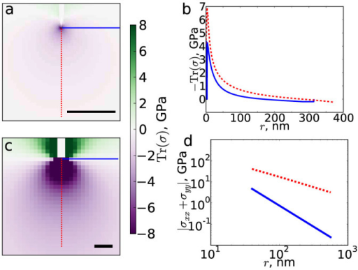 Wrinkle tips generate anisotropic stress fields.(a) Trace of the stress tensor from a single wrinkle, showing tension behind the tip and compression in front, concentrated at the tip. The scale bar represents 100 nm. (b) Slices of the stress trace parallel and perpendicular to the wrinkle direction, as indicated by red and blue lines in panel (a). (c) σxx + σyy for an infinite sheet with an idealized wrinkle imposed. (d) Slices of σxx + σyy parallel and perpendicular to the wrinkle direction, as indicated by red and blue lines in panel (c). For clarity, in panels (a) and (c) the interiors of the wrinkles, defined by a height threshold of 2 Å, are not shown.