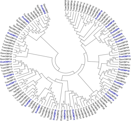 Phylogenetic tree of putative OBPs from Dendroctonus valens (Dval), Ips typographus (Ityp), Dendroctonus ponderosae (Dpon), Tribolium castaneum (Tcas) and Agrilus planipennis (Ap).The D. valens translated unigenes are shown in blue. Amino acid sequences are given in S1 Fig. The tree was constructed with MEGA5.0, using the neighbor-joining method. Values indicated at the nodes are bootstrap values based on 1000 replicates, and the bootstrap values below 50% are not shown.