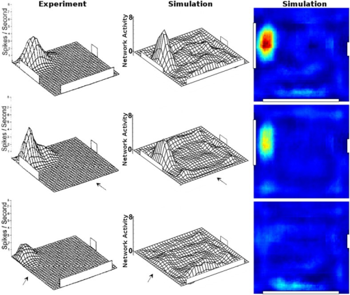 Changes in place cell firing patterns after the removal of previously learned local cues (three white cue cards fixed to the walls). Left column: activity from a single cell recording during cue card removal [Reprinted by permission from APA: Behavioral Neuroscience (Hetherington and Shapiro, 1997)]. Middle column: activity of the closest matching cell as produced in our simulations. Right column: the same cell activity as depicted by the center column formatted with the jet-scale heat map used throughout this work for coherence.