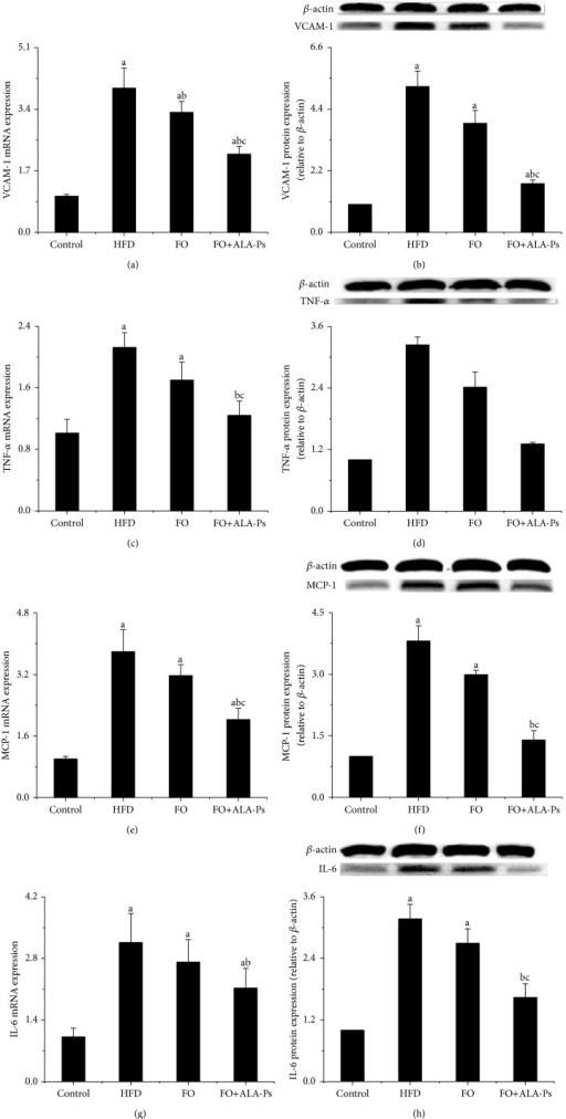Effects of FO+ALA-PS on mRNA and protein expressions of aortic VCAM-1 (a-b), TNF-α (c-d), MCP-1 (e-f), and IL-6 (g-h) in mice. After combining treated flaxseed oil with ALA-PS for 18 weeks, total RNA was extracted from aorta of mice by Trizol. VCAM-1, TNF-α, MCP-1, and IL-6 mRNA expressions were analyzed by real-time RT-PCR. The mRNA of β-actin was quantified as an endogenous control. Aortic lysates were prepared and immunoblotted with corresponding antibody, respectively. Blotting with anti-β-actin was used as a protein loading control. VCAM-1, TNF-α, MCP-1, and IL-6 are presented as fold change relative to Control. Representative immunoblots are shown. Values are given as mean ± standard deviation of the mean (n = 3). aP < 0.05 versus the control; bP < 0.05 versus the HFD group; cP < 0.05 versus the FO group.