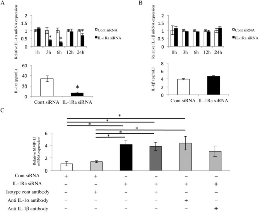 Neutralization of IL-1 does not affect MMP-13 up-regulation.(A) IL-1α and (B) IL-1β mRNA (upper column) and protein expression (lower column) in IL-1Ra siRNA-transfected cells. The cells were cultured for 1, 3, 6, 12, and 24 hours, and then analyzed by real-time PCR. The protein levels in cells cultured for 24 hours were determined by an ELISA. Values represent fold changes (real-time PCR) or concentrations (ELISA). Differences among groups were analyzed using the Student's t-test. Data are expressed as the mean ± SD (n = 3). *p < 0.05 vs each time point control. (C) MMP-13 mRNA expression in IL-1Ra and control siRNA-transfected cells treated with or without anti-IL-1α, anti-IL-1β, or isotype control antibodies (1 μg/ml). Cells were cultured for 6 hours, and then mRNA levels were determined using real-time PCR. Values represent fold changes. Differences among groups were analyzed by one-factor ANOVA and Bonferroni's multiple comparison test. Data are expressed as the mean ± SD (n = 3). *p < 0.05.