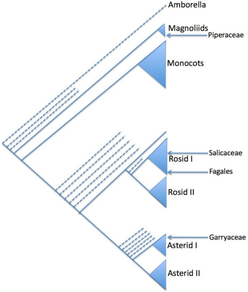 Summary Phylogenetic Diagram Showing The Relative Phylo Open I