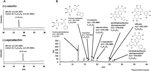 LC-ESI-MS analyses of standard reagents (A) and representative LC chromatogram with estimated chemical structural formulas obtained from MeOH soluble fraction of GPE (B).
