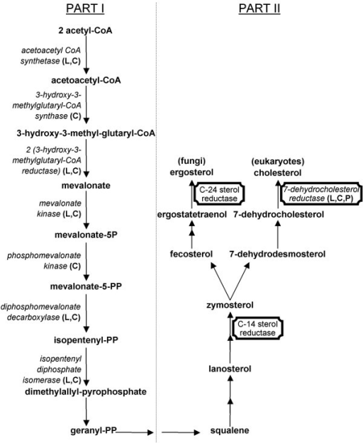 "Eukaryotic sterol biosynthesis. Ergosterol and cholesterol are synthesized in fungi and all eukaryotes respectively. Enzymes present in L. drancourtii (L), C. burnetii (C) and Candidatus ""P. amoebophila"" (P) are represented in italics and enzymes present in the previous phylogenetic tree are framed."