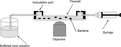 Description of the flow cell.Experimental chamber used for the observation of MinD oscillations in the presence of cations and antimicrobial peptides, as described in the text. Bacteria were observed over a 18 mm×13 mm area on the chamber bottom. The field of illumination and view per image was 0.25 mm2, so that a large number of non-overlapping images could be taken.